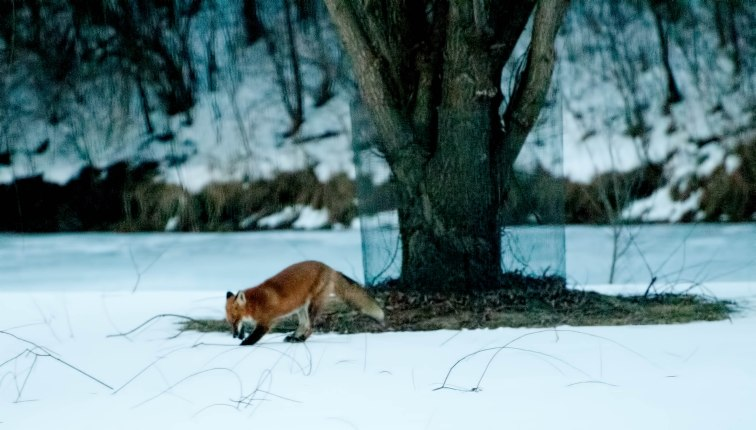 fox-hunting-series-10