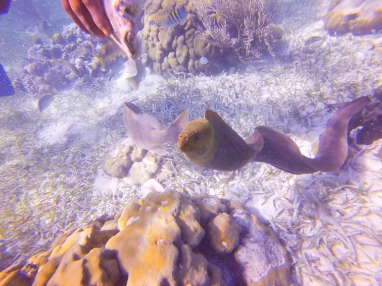 Eel eyeing Rob