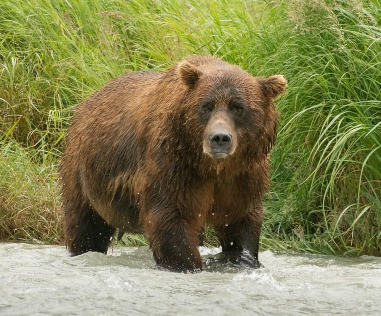 Brown Bear Gray Day (3)