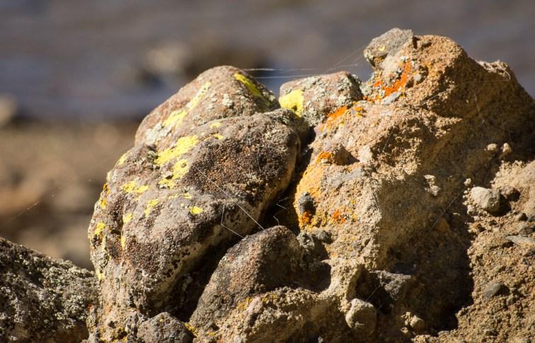lichens (5)