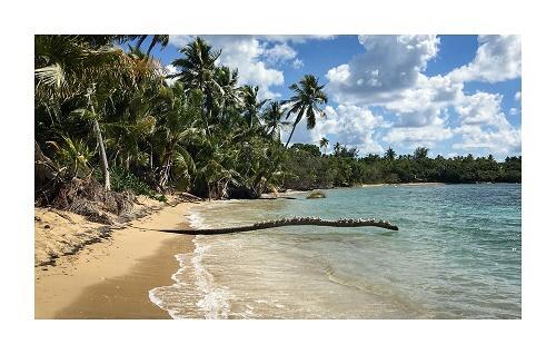 Tropical Dreams beach scene