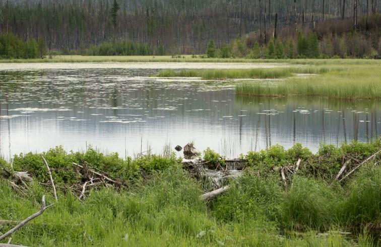 Howe Lake Trail