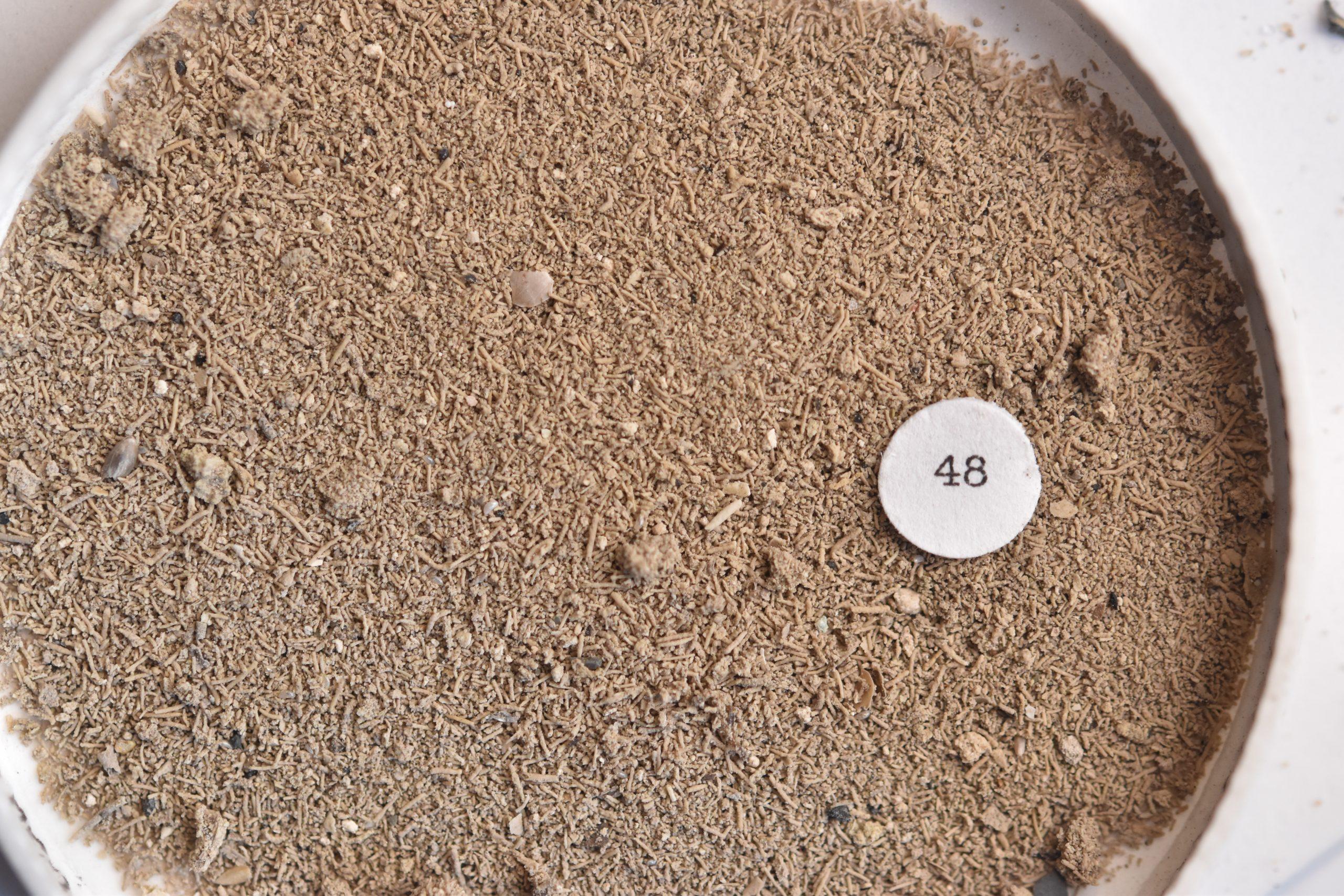 Spearfish Canyon Sand