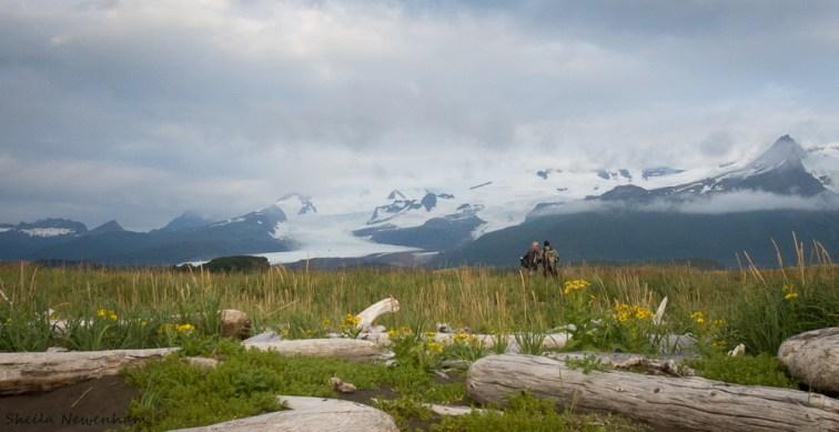 Hallo Bay meadow, glacier