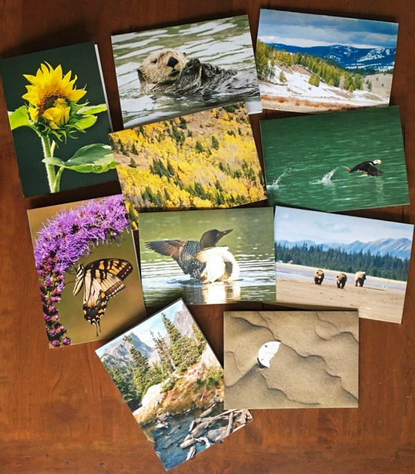 wildlfie photo cards