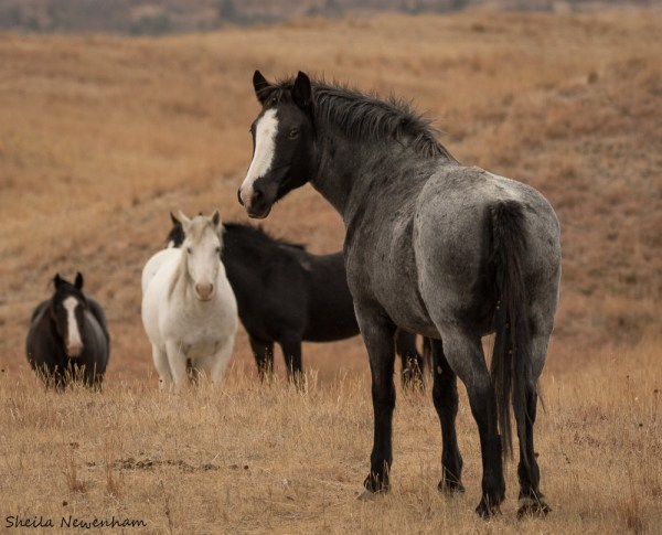 Theodoore Roosevelt National Park Wild Horses