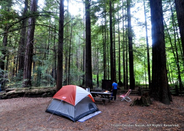 Our camp at Burlington Campground, Humboldt Redwoods State Park