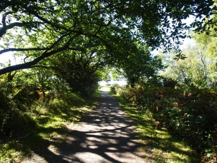 Leafy footpath on Salcombe Hill