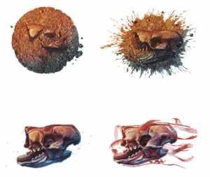Como se forman los fosiles EXPLOROCK PERU Ilustracion 1