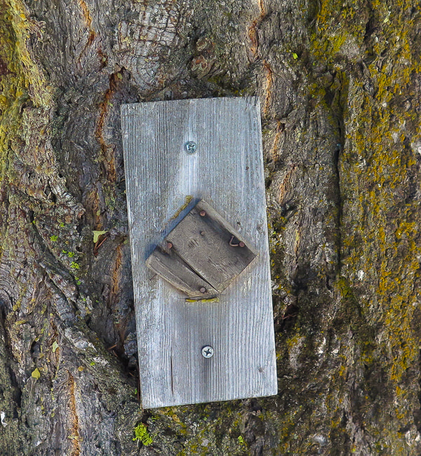 Tree Park Rock Joshua Metamorphic