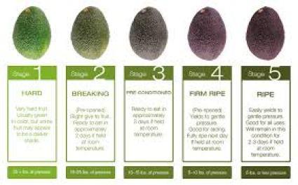 Products - West Pak Avocado Inc.