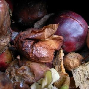 teabag-plum