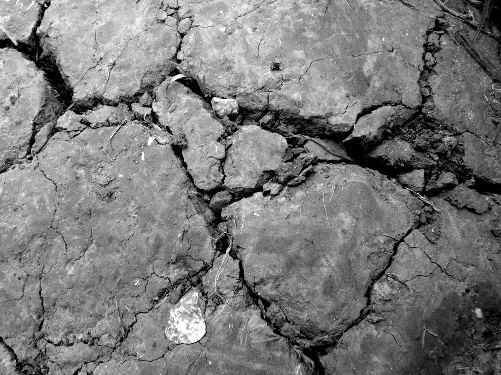 Patterns in the mud
