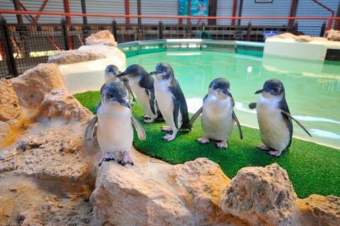 Penguin Parade Melbourne