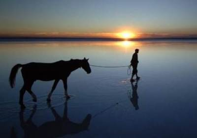 Leading the adult horse to water……