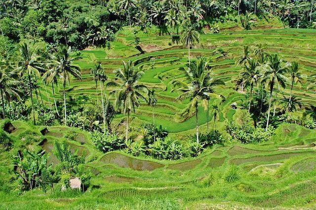 TARIFA ERROR: VUELOS A INDONESIA Y SUDÁFRICA EN EL MISMO VIAJE POR 377EUROS