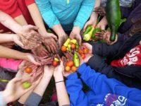 Kids' hands holding vegetables.