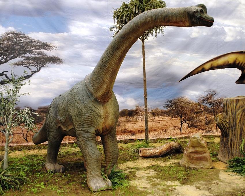 Brachiosaurus   Extinct Animals