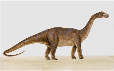 Diplodocus   Extinct Animals