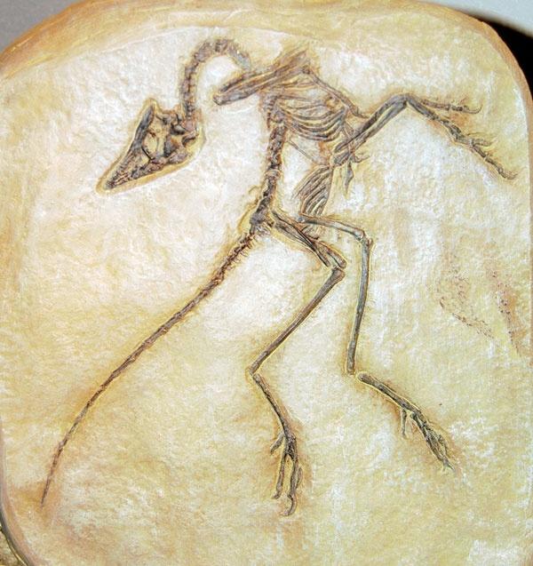 Compsognathus Etymology Facts Classification Adaptation