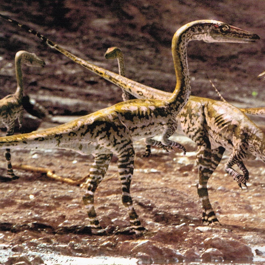 Coelophysis Facts. Habitat. Diet. Fossils. Pictures