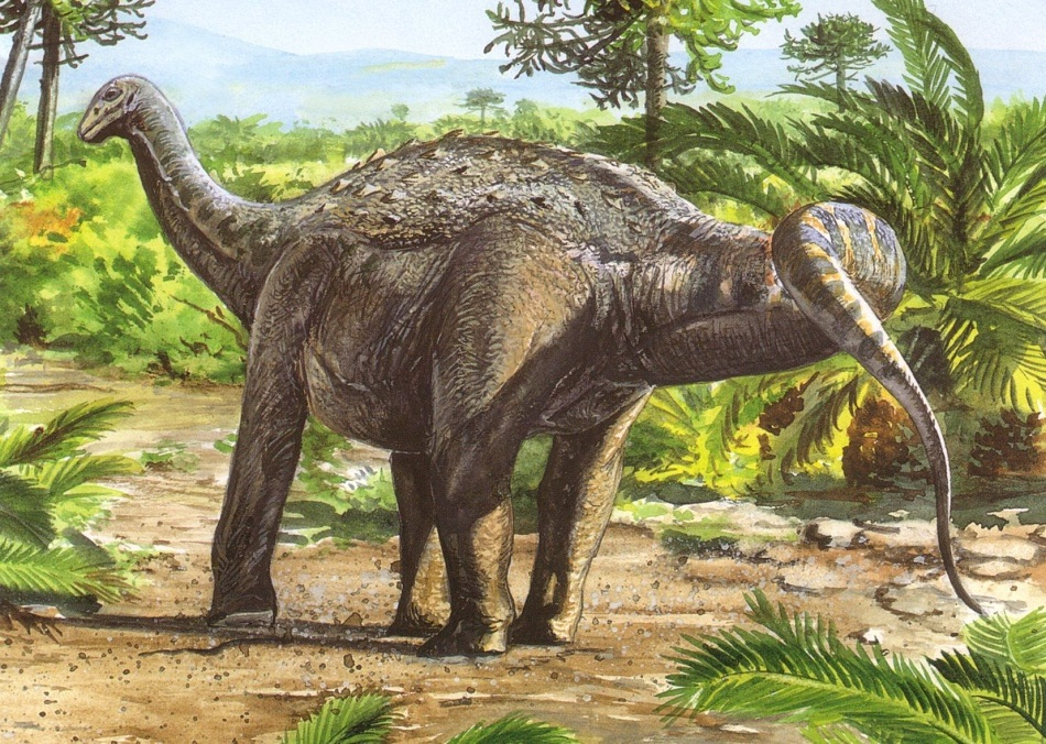Saltasaurus Facts. Habitat. Diet. Fossils. Pictures