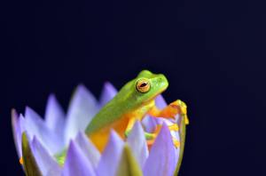 Reptiles-Feature Image