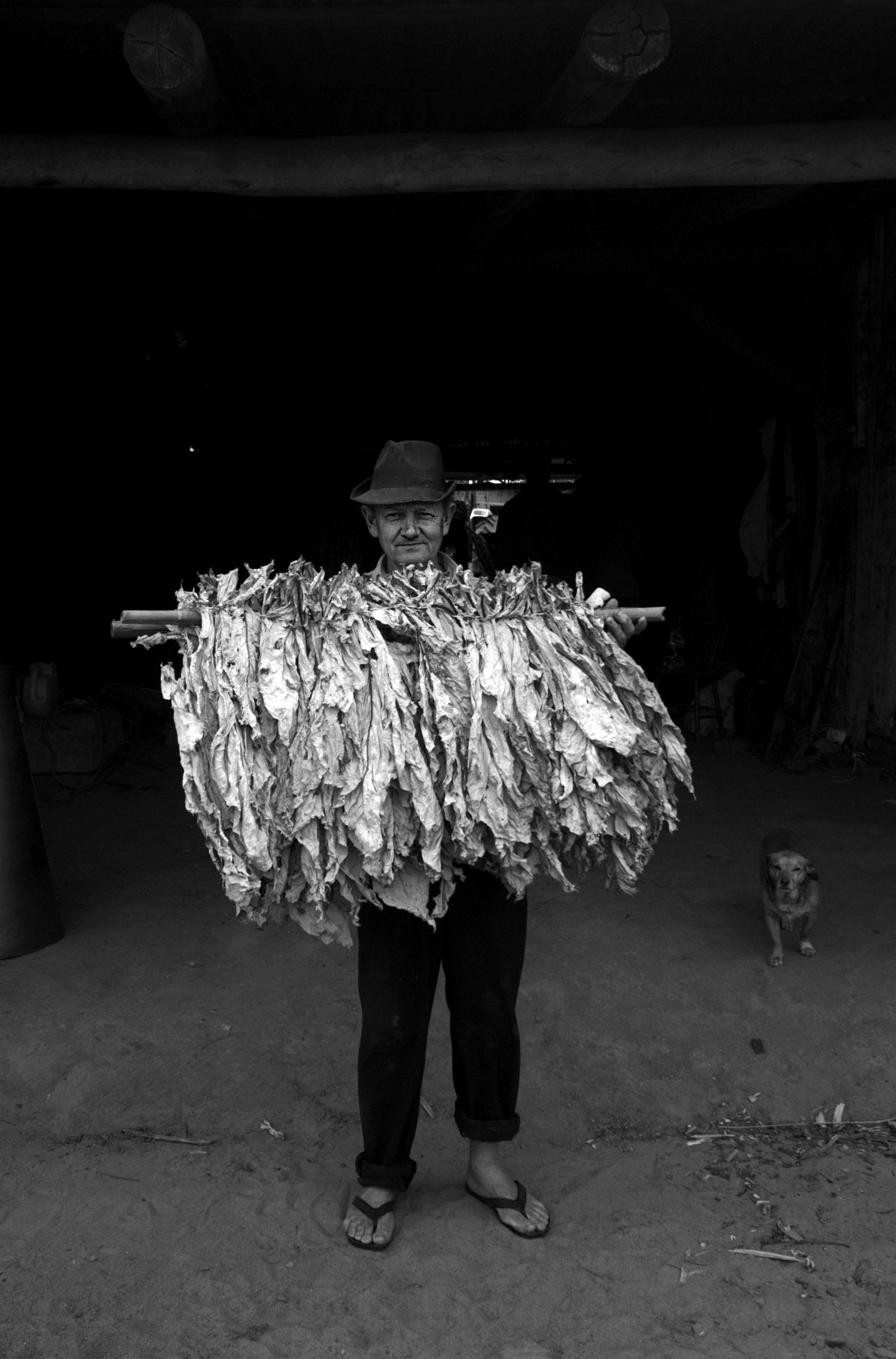 Claudio Lentz, de 54 anos, fumicultor