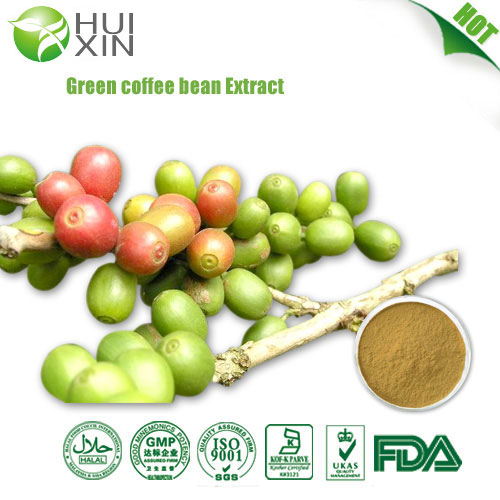 Green coffee bean extractGlobal Supplier of Plant Extract
