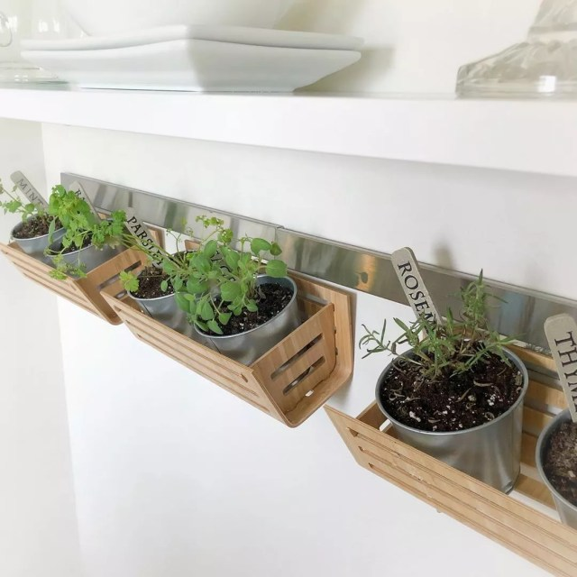 Indoor kitchen herb garden. Photo by Instagram user @silverlininglifestyles