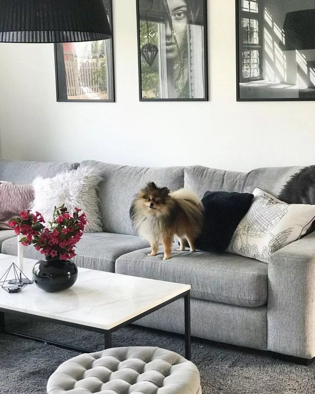 Pomeranian on living room couch. Photo by Instagram user @128.kvadrat