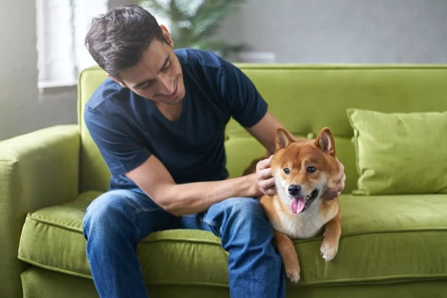 Man petting dog on couch
