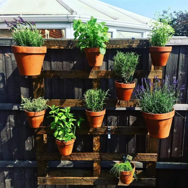 Vertical wall garden on fence. Photo by Instagram user @jess_ruston