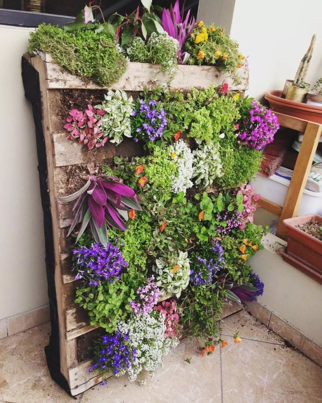 Wooden pallet filled with pink and purple flowers. Photo by Instagram user @sharonj7777