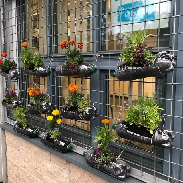 Plastic bottles repurposed as planters for urban garden. Photo by Instagram user @miss_lathe