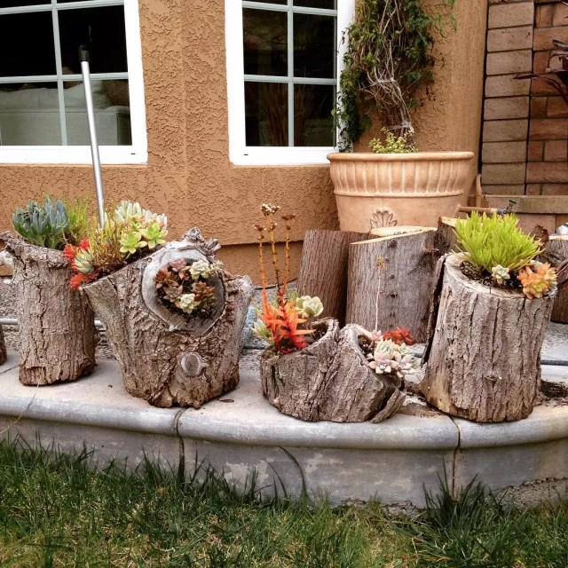 Tree stumps with succulents hanging on them. Photo by Instagram user @dandiggable