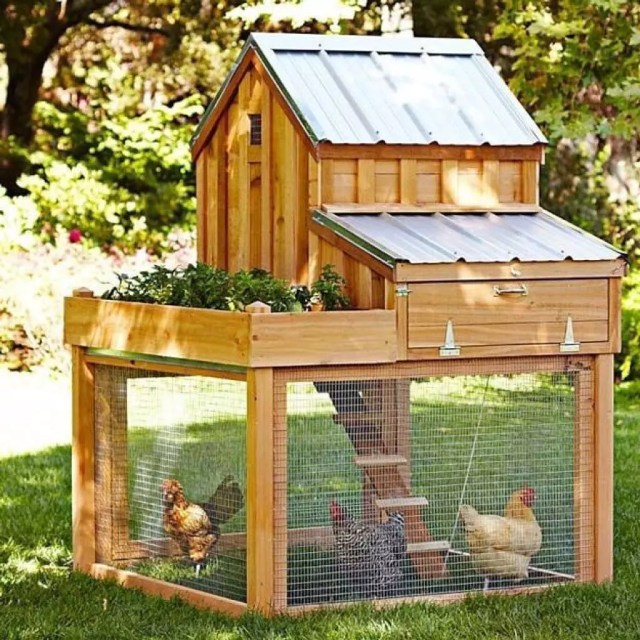 Chicken coop in yard. Photo by Instagram user @favoritethings8010