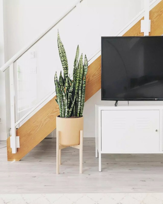 Plant next to TV stand. Photo by Instagram user @puff.pad