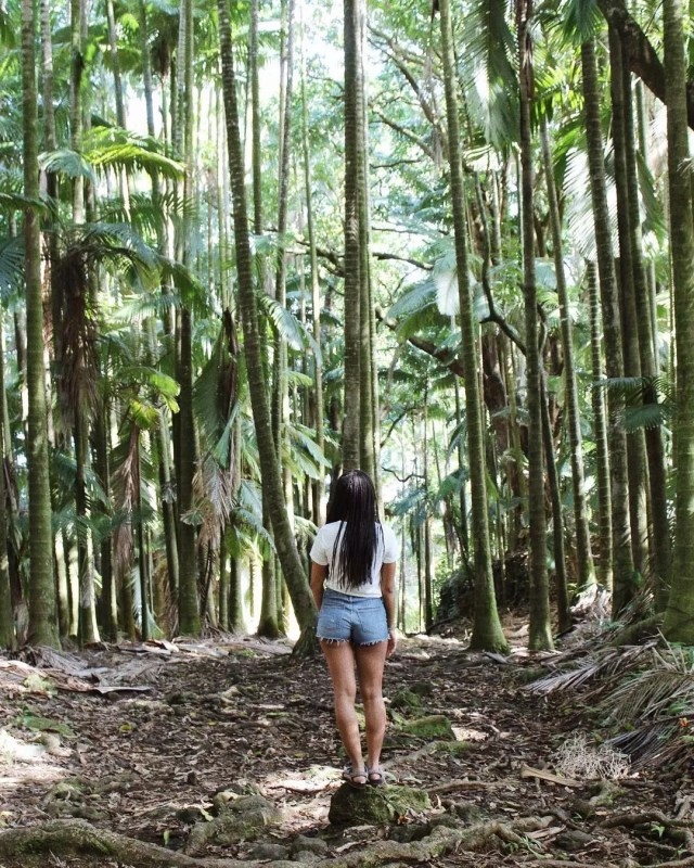 Forest in Pahoa, HI. Photo by Instagram user @greengirlleah