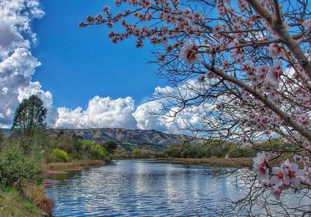 Tree of pink at Putah Creek in Vacaville, CA. Photo by Instagram user @trudylianephotography