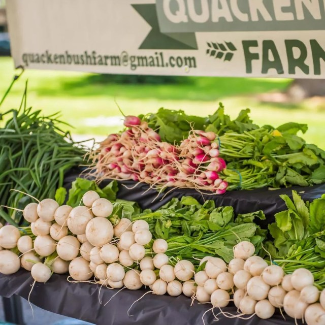 Photo of Radishes and Onions on a Table at the Vancouver Farmers Market. Photo by Instagram user @vancouverfarmersmarket