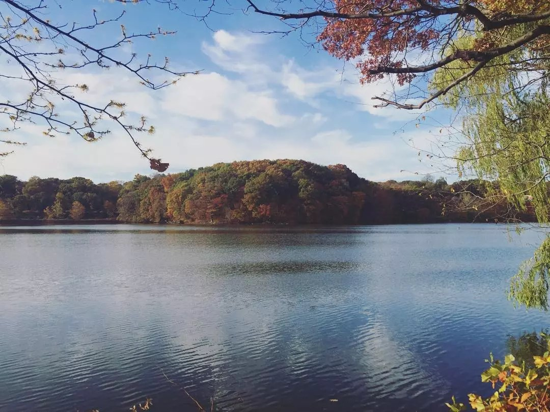 Looking across a lake at Weequahic Park with a thick line of trees on the opposite side. Photo by Instagram user @marg626