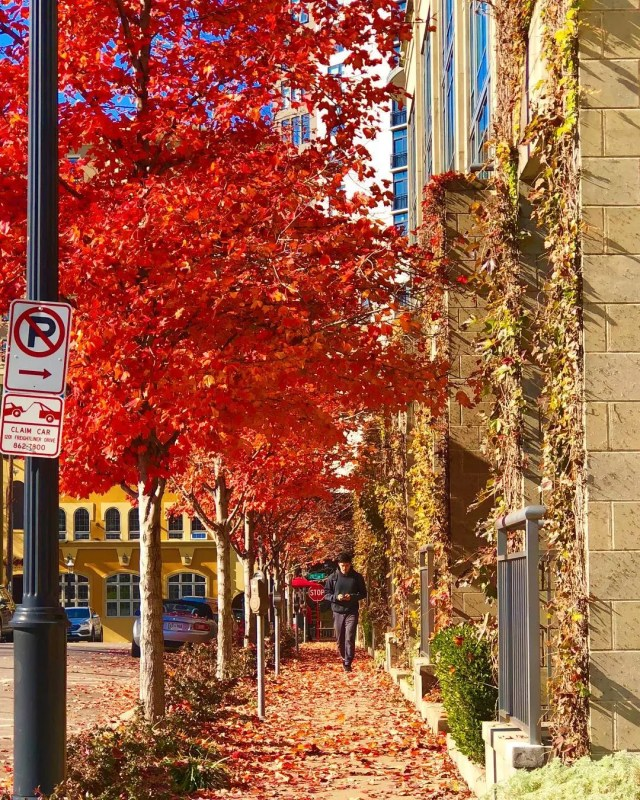 Sidewalk in Midtown Nashville with red and orange leaves during fall. Photo from Instagram user @ms.alberto_styling.