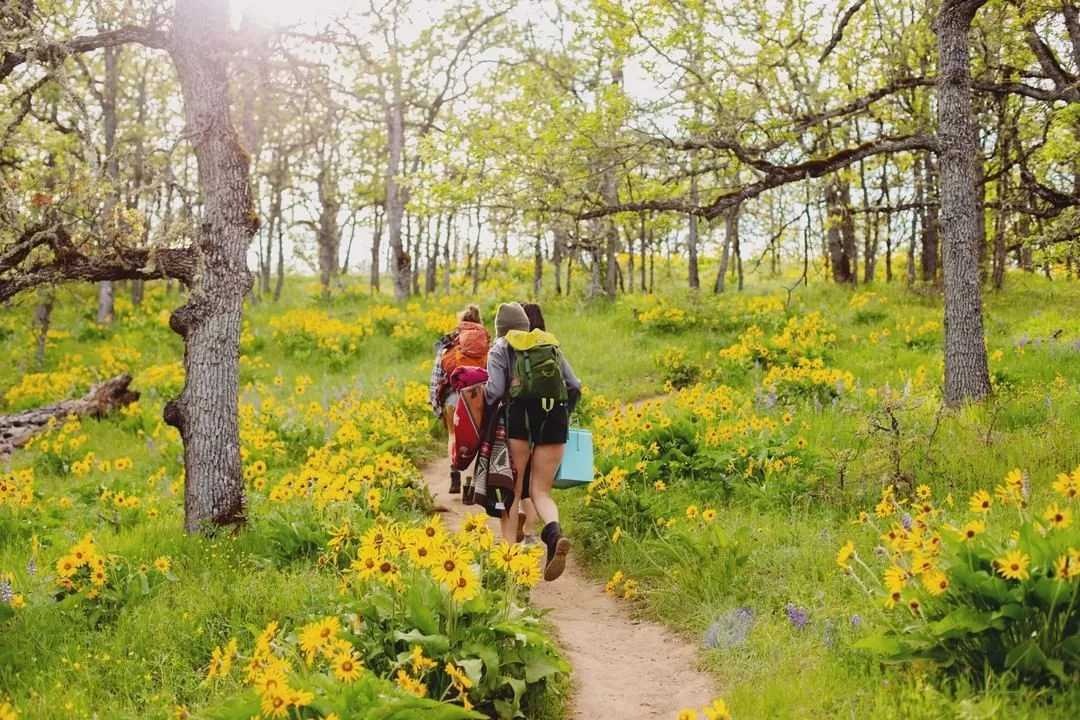 People walking on Columbia River Gorge trail surrounded by yellow flowers. Photo by Instagram user @wildrootsspirits