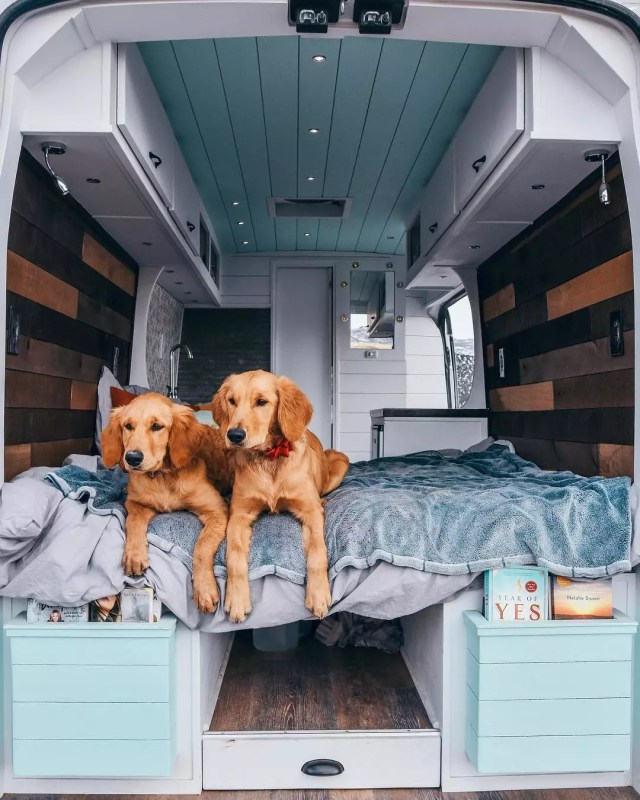 Two brown dogs sitting in a van. Photo by Instagram user @divineontheroad