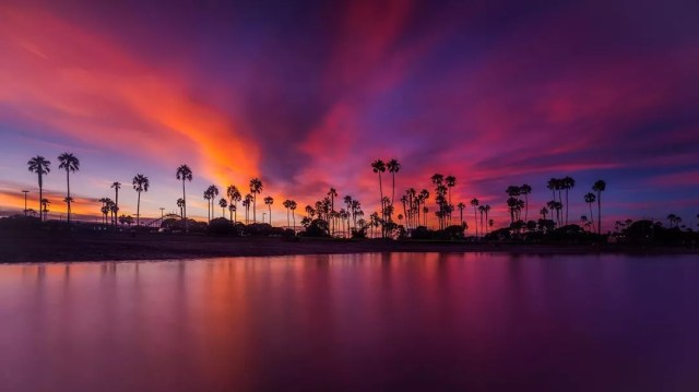 Beach and palm trees with a purple and orange sky at Mission Beach. Photo by Instagram user @alexbaltovphoto