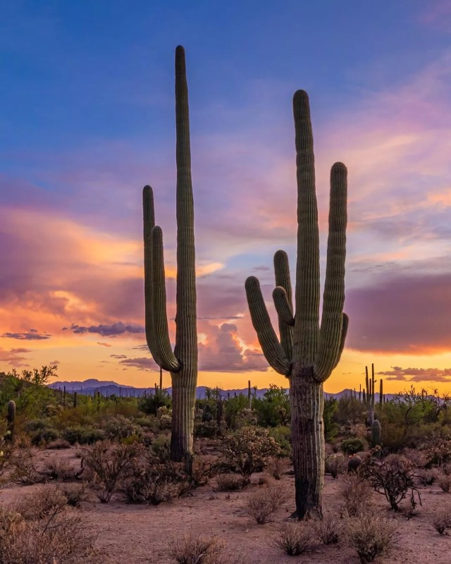 Cacti in a desert at sunset. Photo by Instagram user @marknavarrophoto