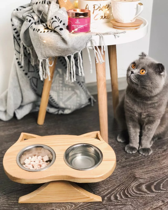 Gray cat sitting next to food bowl and wood stool. Photo by Instagram user @lia_obri