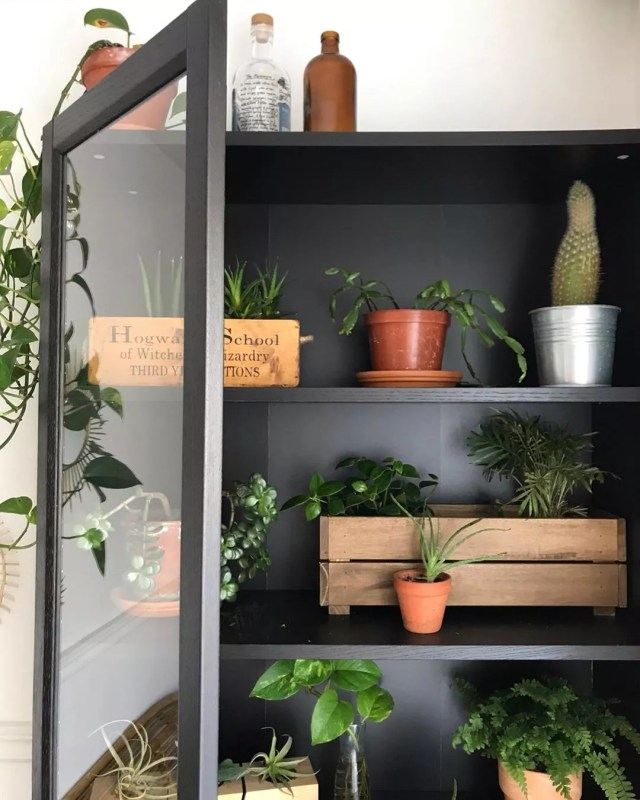 Houseplants inside cabinet. Photo by Instagram user @cynthiadulude