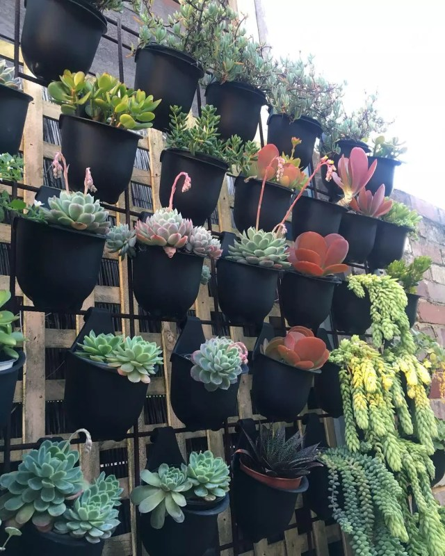 potted plants placed on vertical wall photo by Instagram user @succulent_treasure_chest